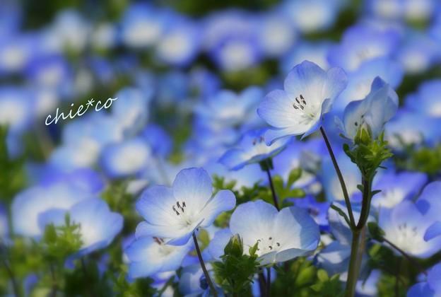 くりはま花の国-114