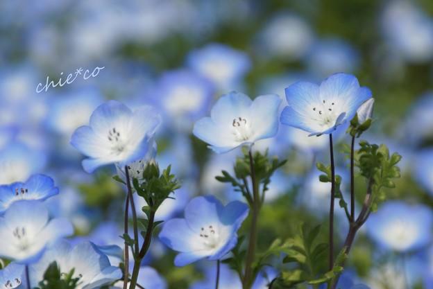 くりはま花の国-123