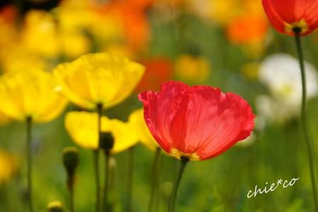 くりはま花の国-068