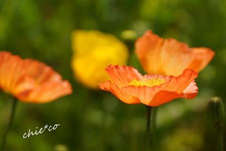 くりはま花の国-071