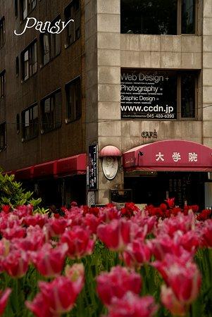 チューリップの咲く街角・・2