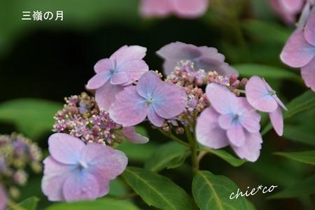 鎌倉長谷-100