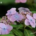 写真: 鎌倉長谷-100