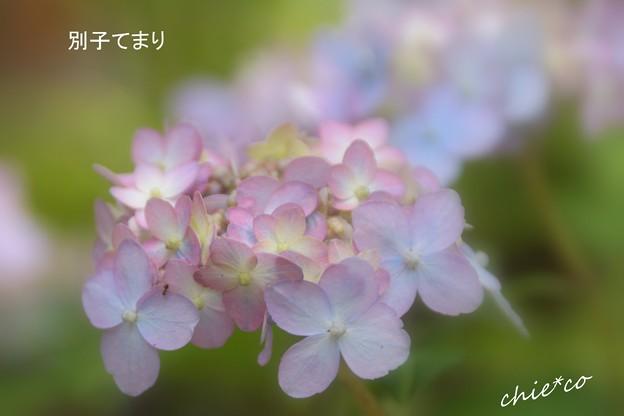 鎌倉長谷-141