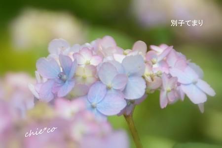 鎌倉長谷-148