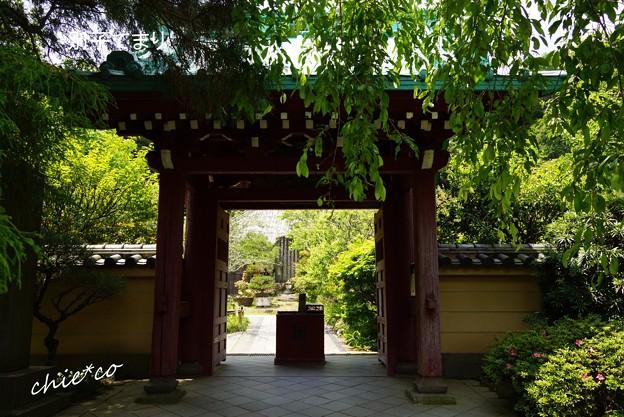 写真: 鎌倉長谷-286