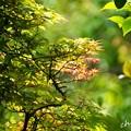 写真: 鎌倉長谷-170