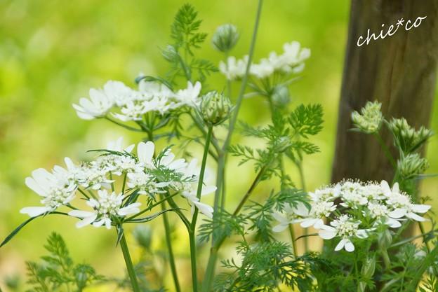 花菜ガーデン-077