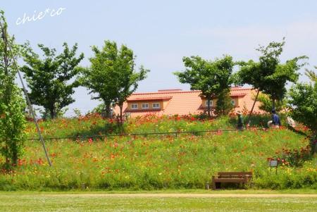 花菜ガーデン-158
