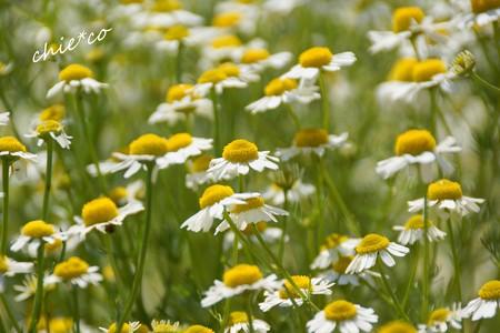 花菜ガーデン-138