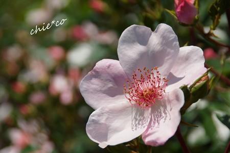 花菜ガーデン-323