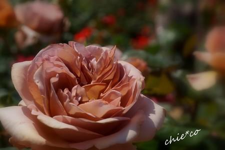 花菜ガーデン-349
