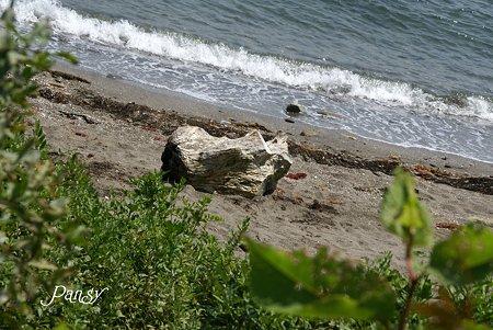 流木のある小さな浜・・