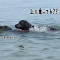 Photos: 花初泳ぎ4