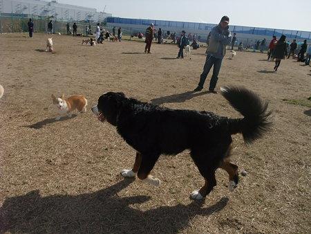 すごい数の人&犬