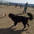 Photos: すごい数の人&犬