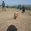 Photos: ボール遊び大好き♪
