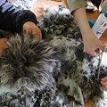 Photos: これは犬か?!毛だけか?!