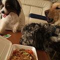 Photos: みんな食い物狙ってる・・・