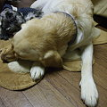 Photos: スヤスヤ・・・