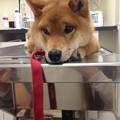 Photos: 診察台の上でもこの通り