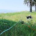 Photos: 春馬を追っかけ、春馬ひっくり返り