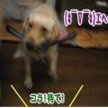 Photos: 紫音9.jpg10