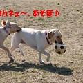Photos: あそぼ