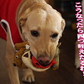 Photos: 4つ咥え!