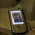 Photos: 私の携帯の待ち受けだったはずが・・・
