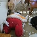 Photos: 悟天特集だ~3