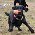 Photos: ボール遊び2
