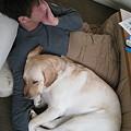Photos: 紫音の枕