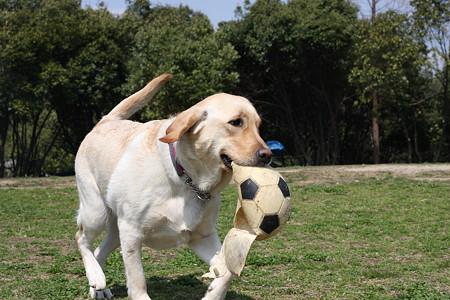 ボールが欲しい…