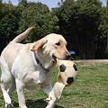 Photos: ボールが欲しい…