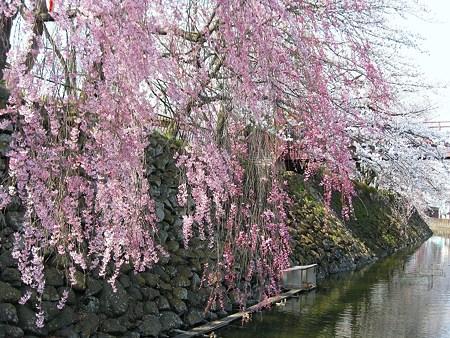 2009年4月12日 高島城など (38)
