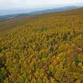 写真: 八甲田山の紅葉