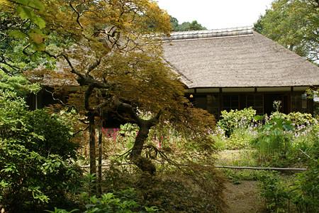 浄智寺書院の奥庭0906a