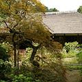 写真: 浄智寺書院の奥庭0906a