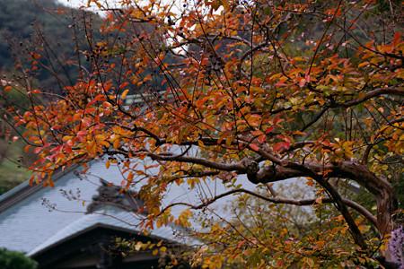 紅葉の海蔵寺1109b