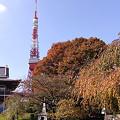写真: 紅葉の東京タワー1113s