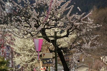 吉野梅郷沿道0311a