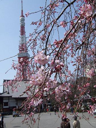 タワーと枝垂れ桜0319b
