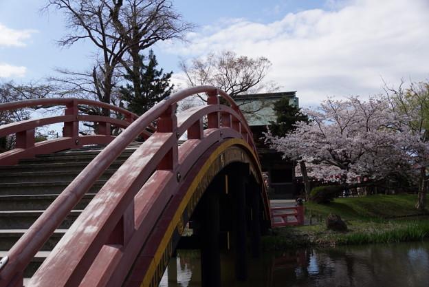 反橋と桜の境内、称名寺14!