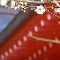 Photos: 白梅荏柄天神社0127ta