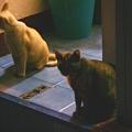 写真: 近所の猫たち