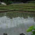 御庭の井田