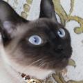 Photos: アタシの瞳は、サファイア