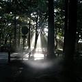 080902木洩れ日1