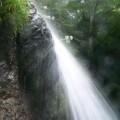 Photos: P1220905白百合は岩肌にいて滝しぶき